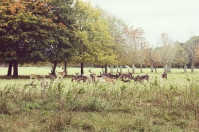 maraviwonderful_phoenix6_deer